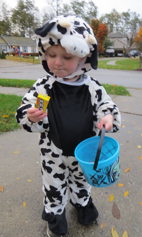 Cow costume toddler, Halloween costume ideas for kids, jessicagoodpaster.com